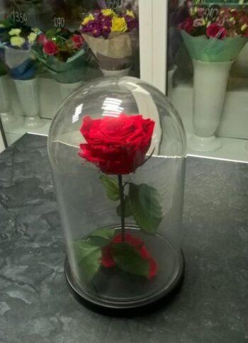 Роза в колбе красная в Янауле