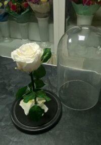 Роза в колбе белая в Янауле