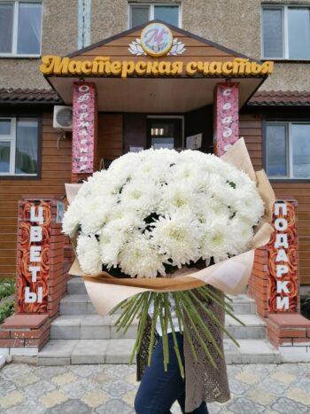 35 одноголовых хризантем сорта Антоновка Янаул